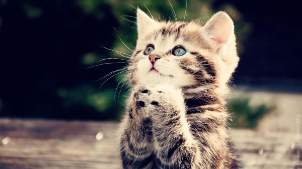 Begging Cat