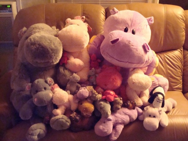 Hippo-Collection